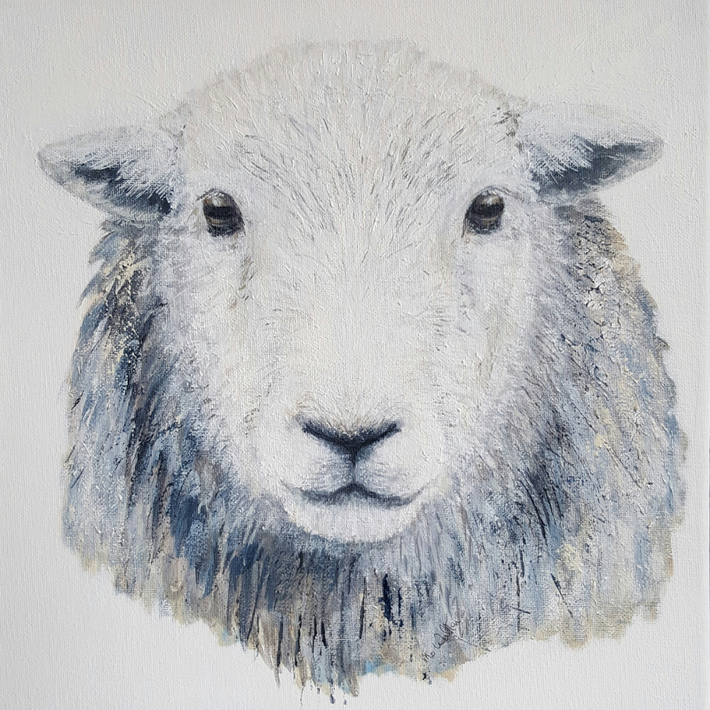 Herdwick Sheep 1