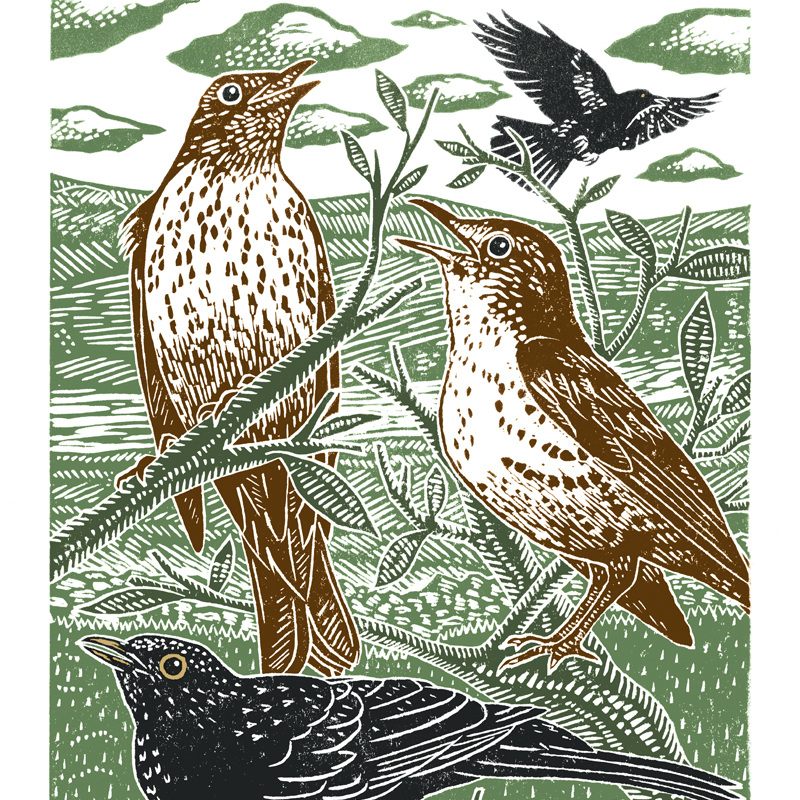 Blackbirds And Thrushes
