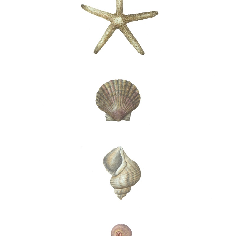 Stafish and Shells