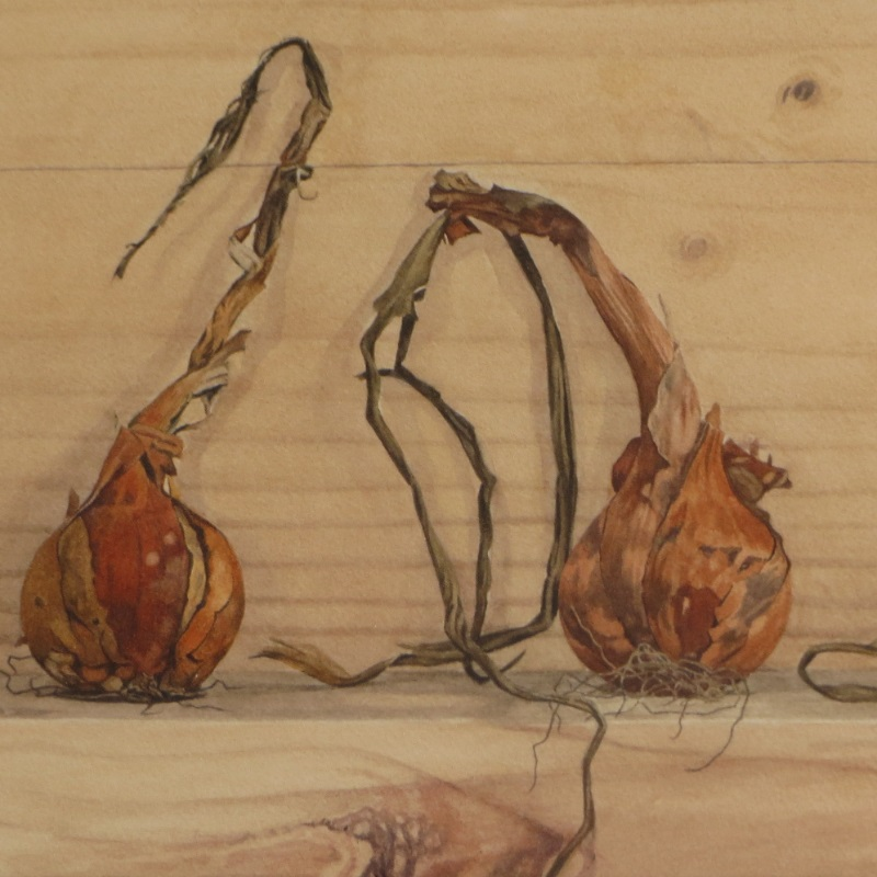 Three onions (detail)